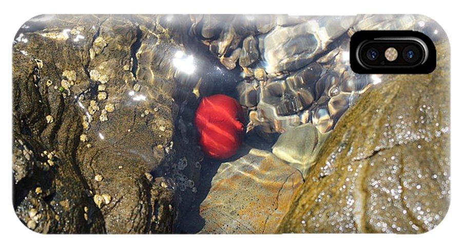 Tomato IPhone X / XS Case featuring the photograph Tomato Sea by Samantha Mattiello