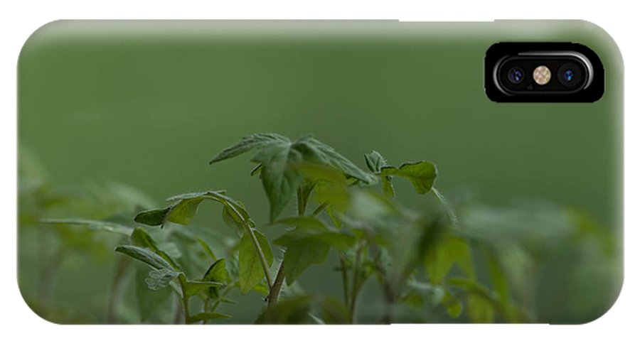 Agriculture IPhone X Case featuring the photograph Tomato seedlings in the morning by Adrian Bud
