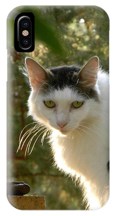 Top Cat Of The Ranch IPhone X Case featuring the photograph Top Cat Of The Ranch by Warren Thompson