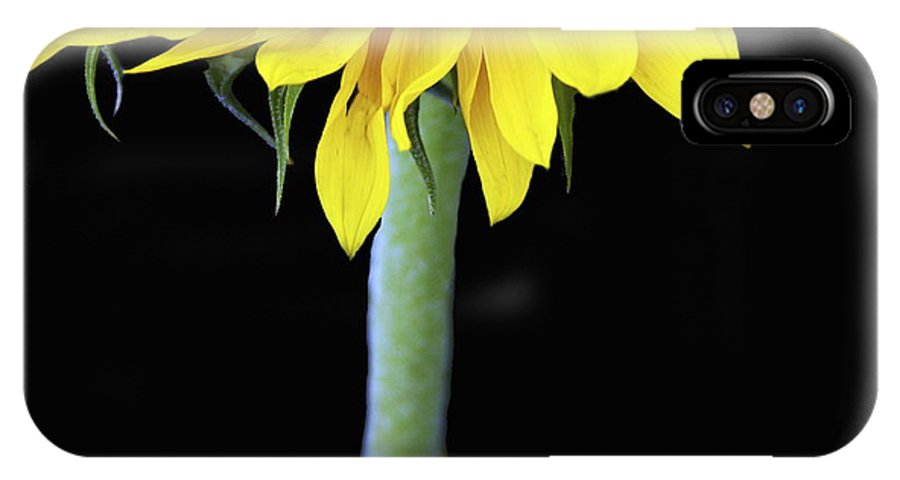 Sunflower IPhone X Case featuring the photograph Topper by Rebecca Cozart