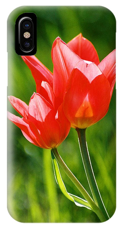 Flowers IPhone X Case featuring the photograph Toronto tulip by Steve Karol