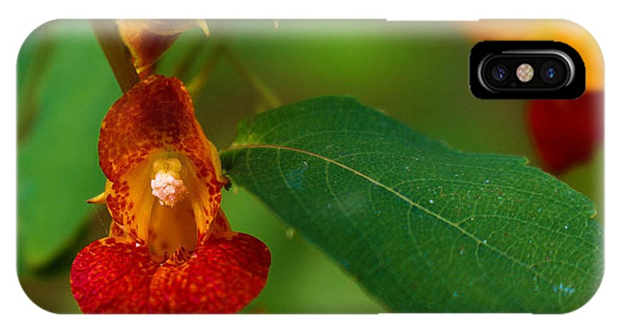 Touch Me Not IPhone X Case featuring the photograph Touch-me-not by Jessica Fronabarger
