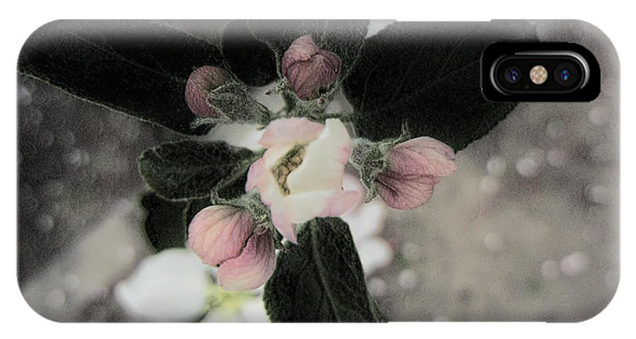 Apple Tree Blossom IPhone X Case featuring the photograph Touch Of The Past by Bobbie Barth