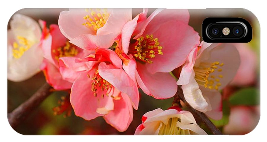 Quince IPhone X Case featuring the photograph Toyo-nishiki Quince Blooms by Kathryn Meyer
