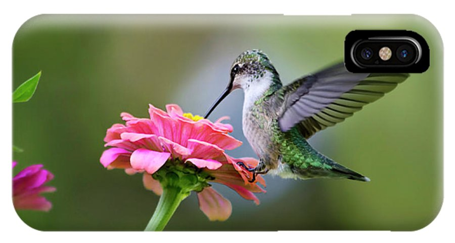 Hummingbird IPhone X Case featuring the photograph Tranquil Joy by Christina Rollo