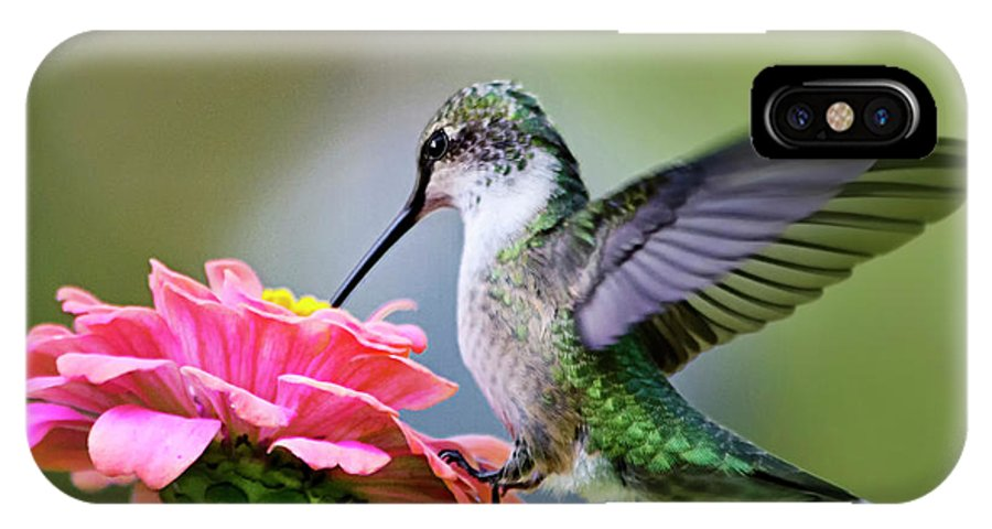 Hummingbird IPhone X Case featuring the photograph Tranquil Joy Hummingbird Square by Christina Rollo