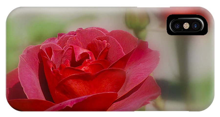 Rose IPhone X Case featuring the photograph Transitions of the Rose by Larry Keahey