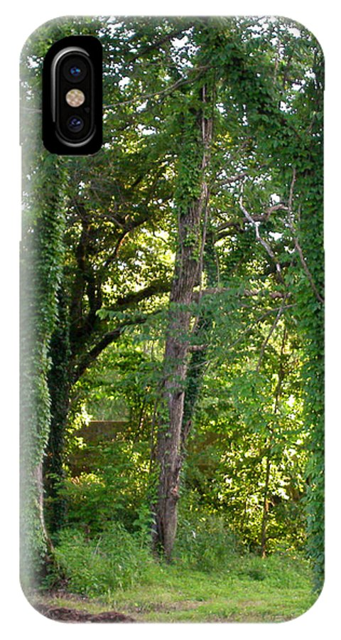 Trees IPhone X Case featuring the photograph Tree Cathedral 2 by Anne Cameron Cutri