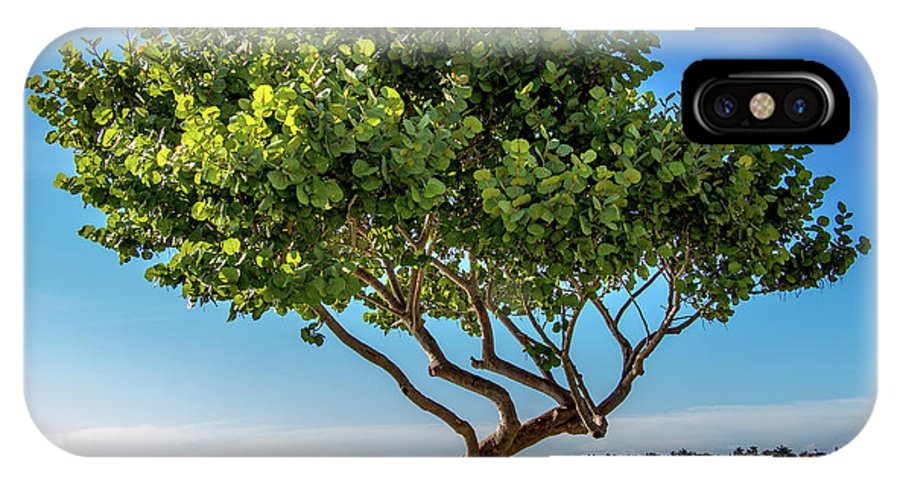 Bird Key Park IPhone X Case featuring the photograph Tree On The Bay by Richard Goldman