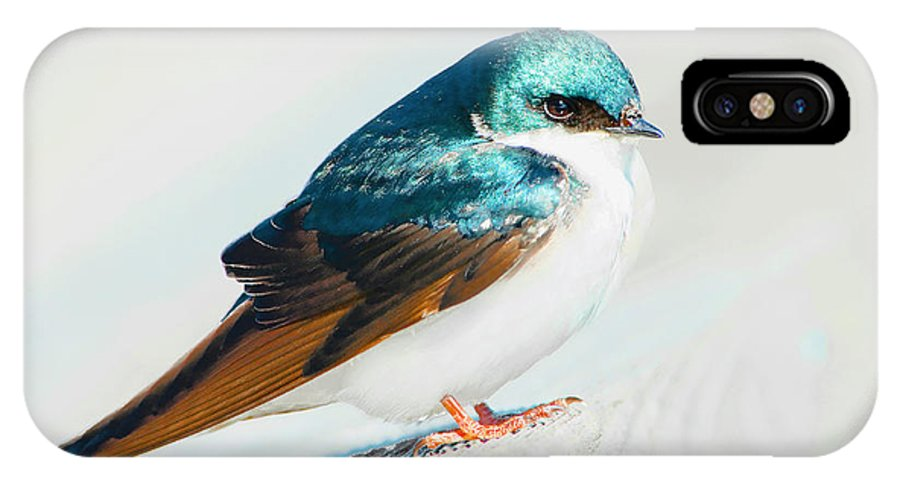 Tree Swallow IPhone X Case featuring the photograph Tree Swallow by Regina Geoghan