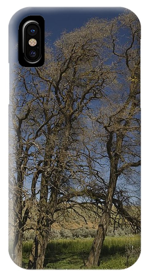 Trees IPhone X Case featuring the photograph Trees by Sara Stevenson