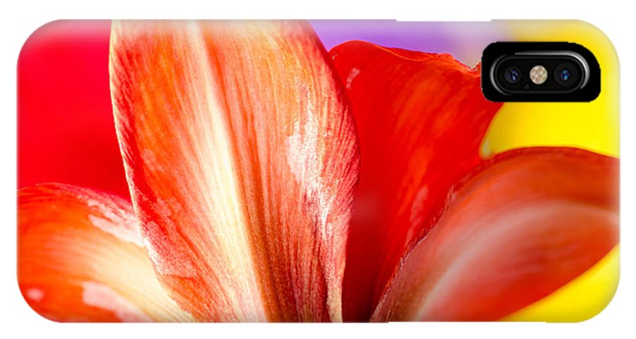 Amaryllis IPhone X Case featuring the photograph Tricolor Amaryllis Red Amaryllis Petals On A Yellow Red And Purple Background by Andy Smy