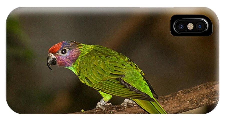Tropical IPhone X Case featuring the photograph Tropical Bird by Douglas Barnett
