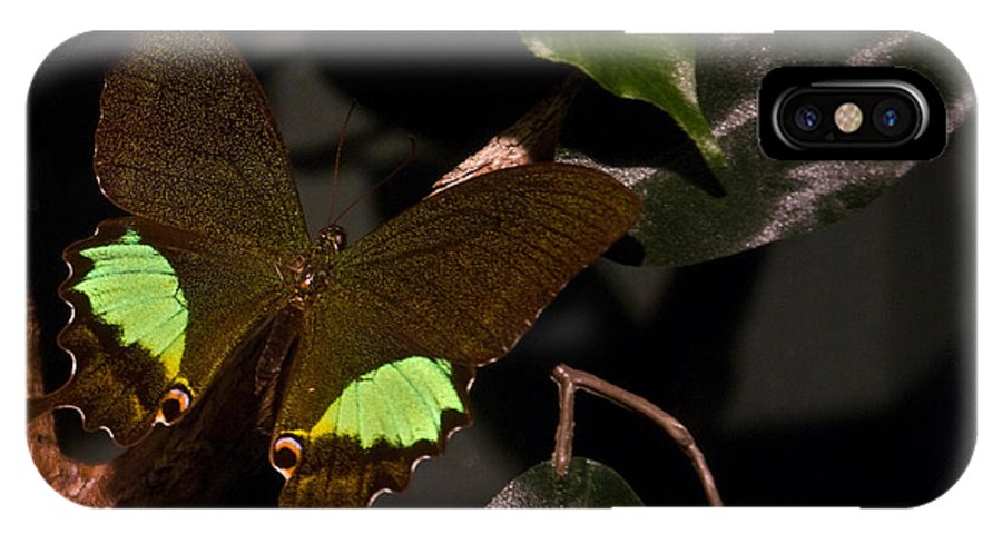 Tropical IPhone X Case featuring the photograph Tropical Buterfly by Douglas Barnett