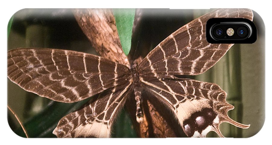 Butterfly IPhone Case featuring the photograph Tropical Butterfly by Douglas Barnett