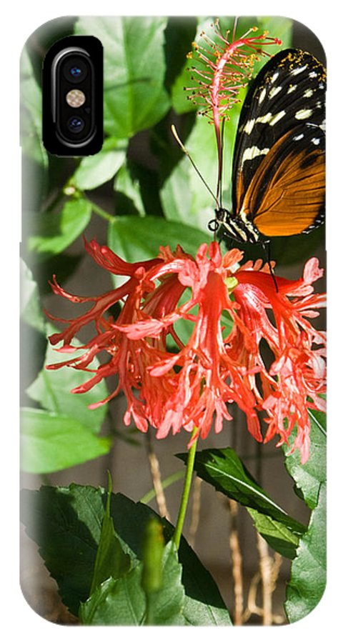 Tropical IPhone X Case featuring the photograph Tropical Butterfly On Flower by Douglas Barnett