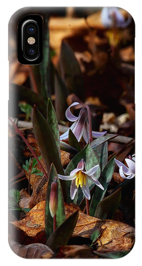 Trout Lillie IPhone X Case featuring the photograph Trout Lillie in Lost Valley by Michael Dougherty