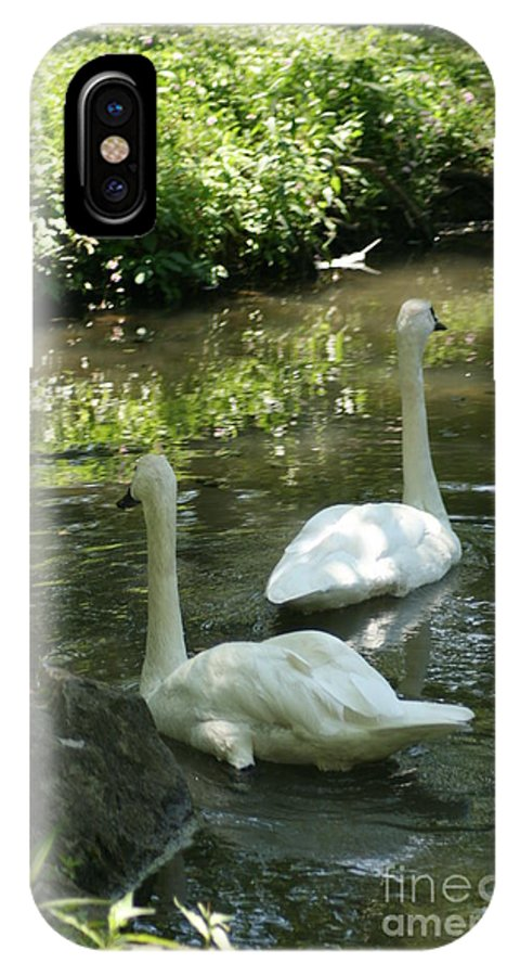 Water IPhone X / XS Case featuring the photograph Trumpeter Swans by Dawn Downour