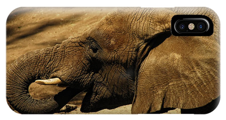 Elephant IPhone X Case featuring the photograph Trunk Show by Donna Blackhall