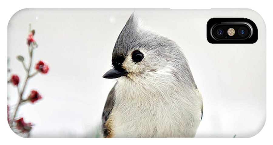 Titmouse IPhone X / XS Case featuring the photograph Tufted Titmouse Square by Christina Rollo