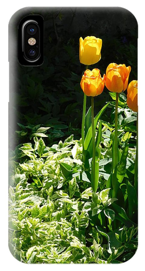 Tulip IPhone X Case featuring the photograph Tulip #1 by Shelby Bryson