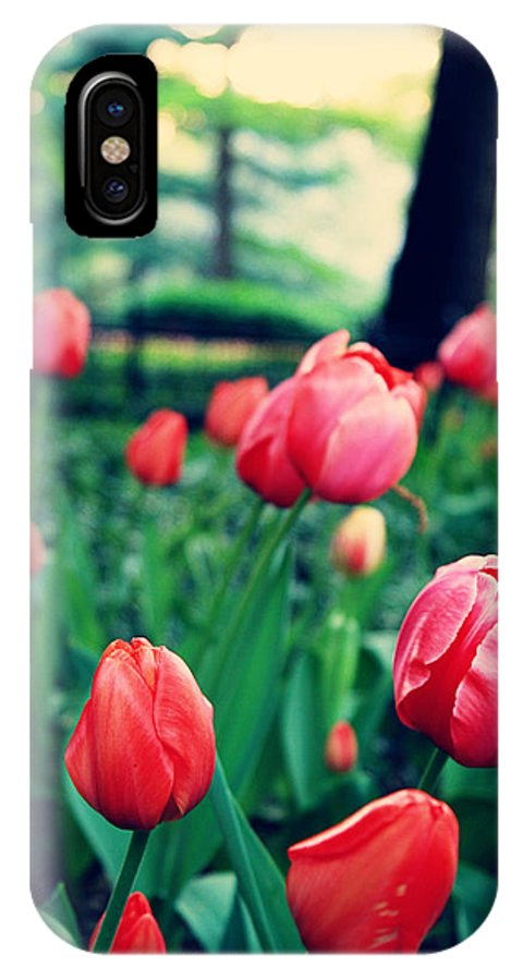 Tulips IPhone X Case featuring the photograph Tulip by Ariane Moshayedi