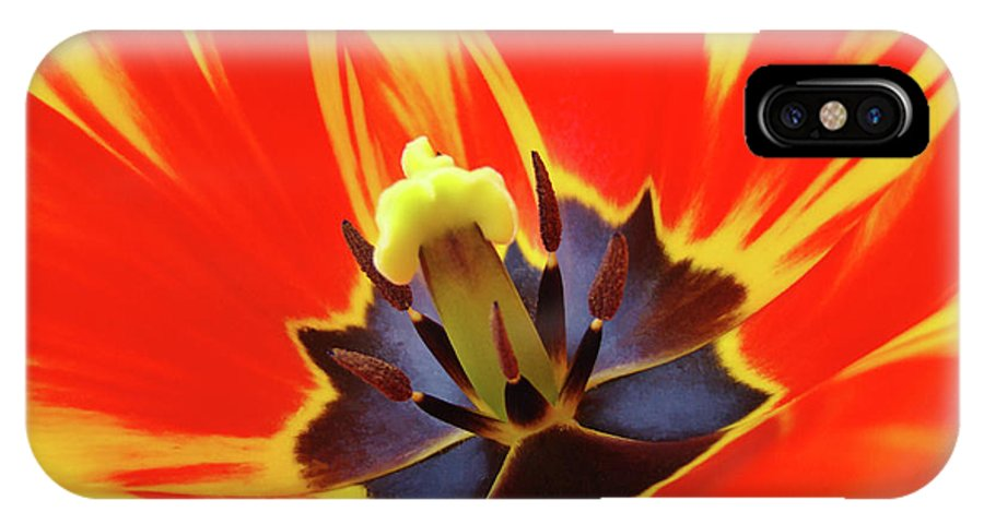 Tulip IPhone X Case featuring the photograph Tulip Flower Floral Art Print Red Yellow Tulips Baslee Troutman by Baslee Troutman