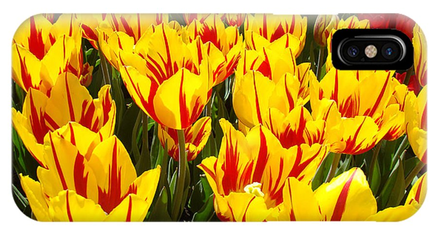 Tulip IPhone X Case featuring the photograph Tulip Flowers Festival Yellow Red art prints Tulips by Patti Baslee