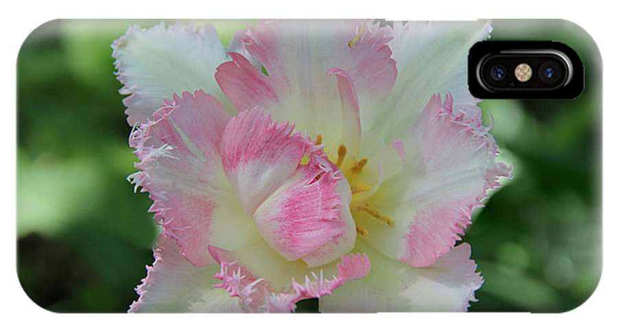 Tulip Galerie Poster IPhone X / XS Case featuring the photograph Tulip Galerie by Sergey Lukashin