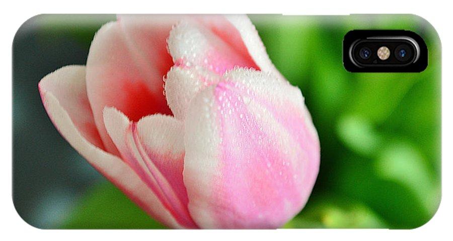 Tulip IPhone X Case featuring the photograph Tulip Portrait by Felicia Tica