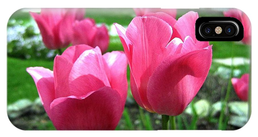 Tulips IPhone X Case featuring the photograph Tulipfest 3 by Will Borden