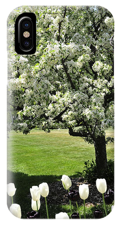 Flowering Tree IPhone X Case featuring the photograph Tulips And Tees by David Arment