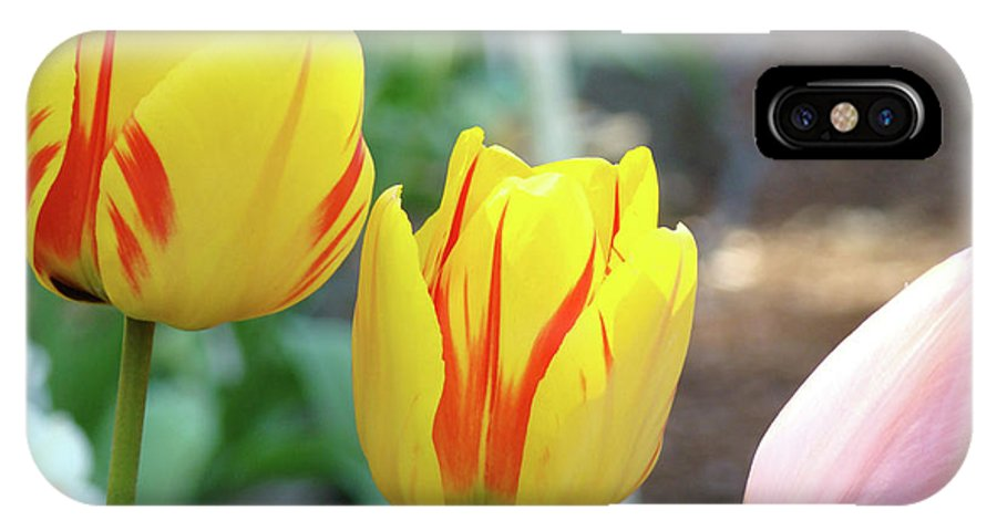 Tulip IPhone X Case featuring the photograph Tulips Garden Art Prints Yellow Red Tulip Flowers Baslee Troutman by Baslee Troutman