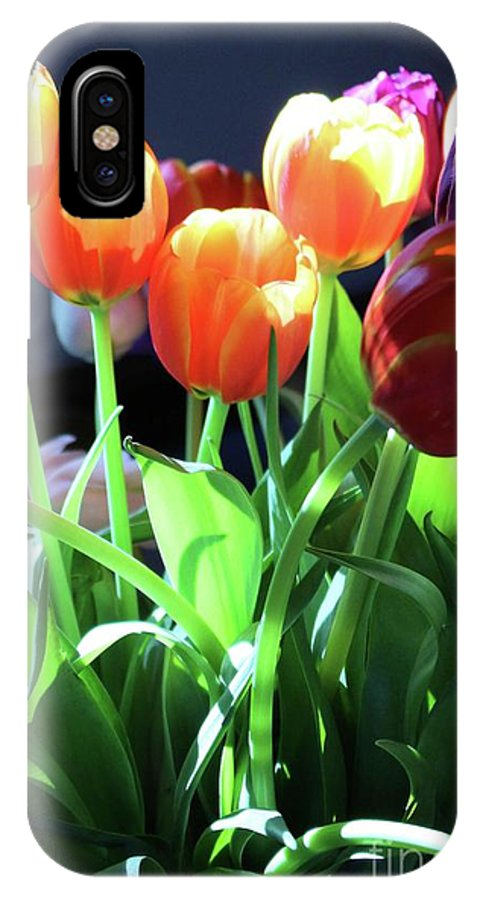 Tulips IPhone X Case featuring the photograph Tulips In The Light by Brenda Ackerman
