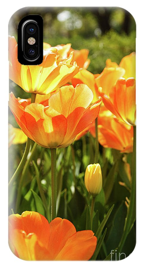 Tulips IPhone X / XS Case featuring the photograph Tulips In The Sunlight by Terri Morris