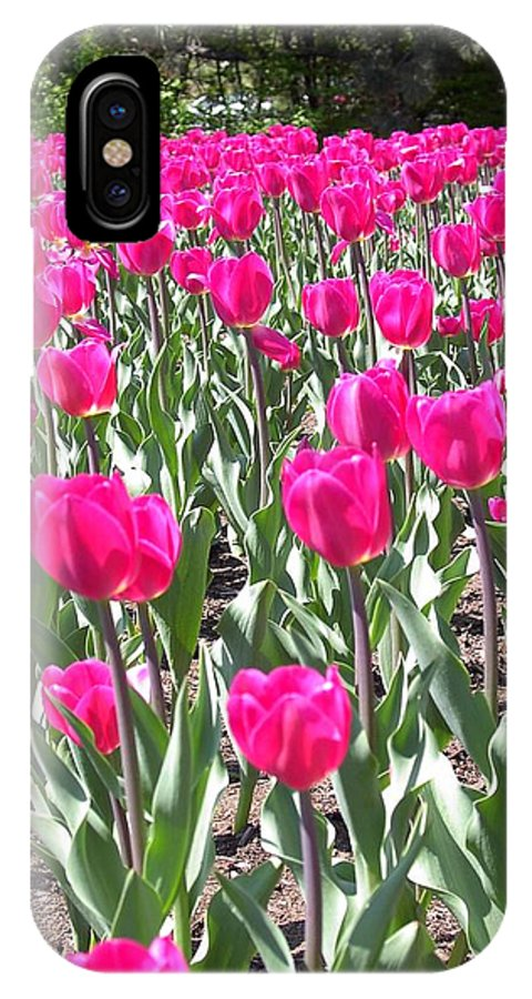 Charity IPhone Case featuring the photograph Tulips by Mary-Lee Sanders