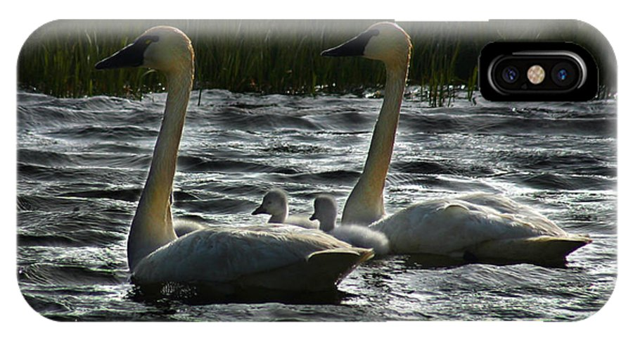 Tundra Swans IPhone X Case featuring the photograph Tundra Swans by Anthony Jones
