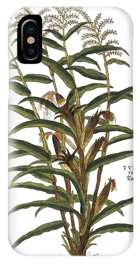 1730s IPhone X Case featuring the photograph Turkish Corn, 1735 by Granger