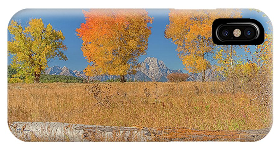 Luis Ramirez IPhone X Case featuring the photograph Turning Of Leaves by Luis A Ramirez