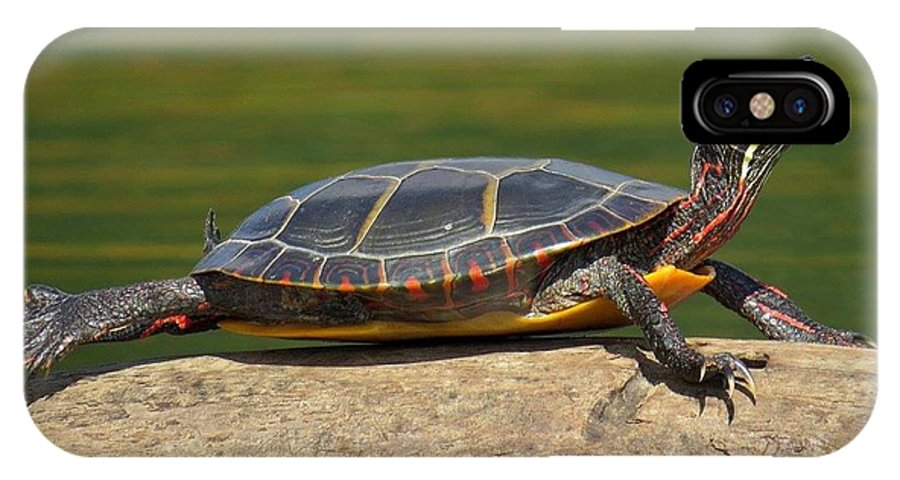 IPhone X Case featuring the photograph Turtle by Beth Sibik