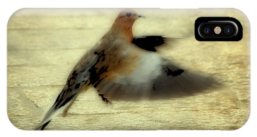 Jewish IPhone X Case featuring the photograph Turtle Dove by Deb Cohen