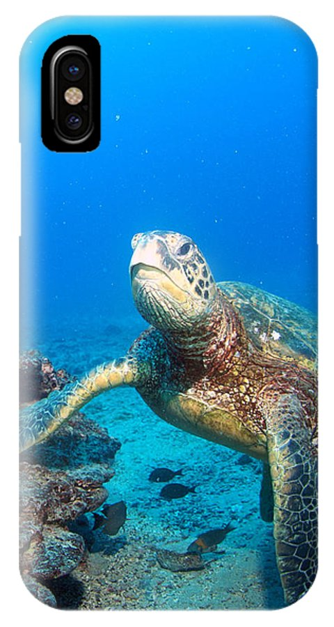IPhone X Case featuring the photograph Turtle Portrait by Todd Hummel