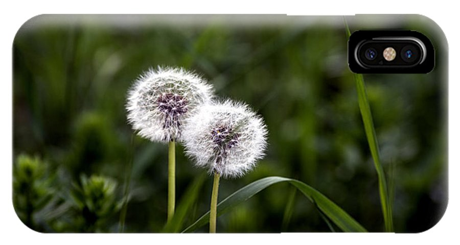 Abstract IPhone X Case featuring the photograph Twin Dandelions by Adrian Bud