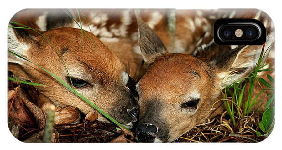 Whitetail Deer IPhone X Case featuring the photograph Twin Newborn Fawns by Michael Dougherty