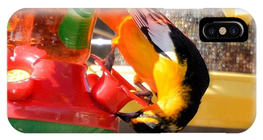 Bird IPhone X Case featuring the photograph Twisted Oriole by Wendy Fox