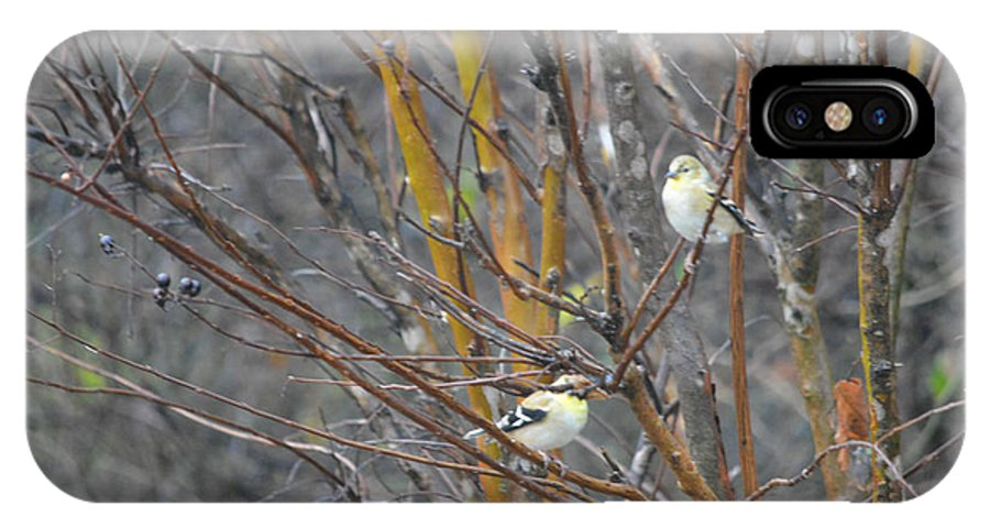 Two American Goldfinch Prints IPhone X Case featuring the photograph Two American Goldfinch by Ruth Housley