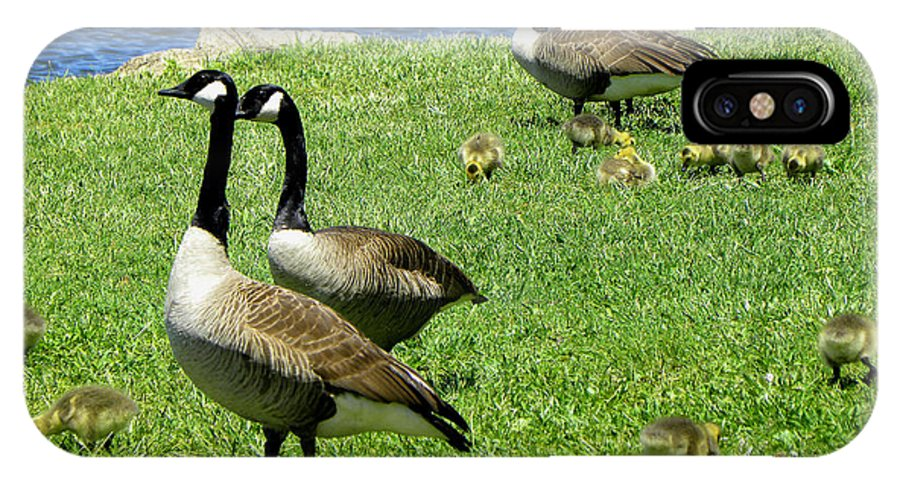 Geese IPhone X Case featuring the photograph Two By Two by Sandi OReilly