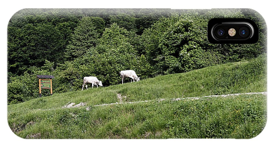 Agriculture IPhone X Case featuring the photograph Two cows grazing on the edge of a mountain road by Adrian Bud