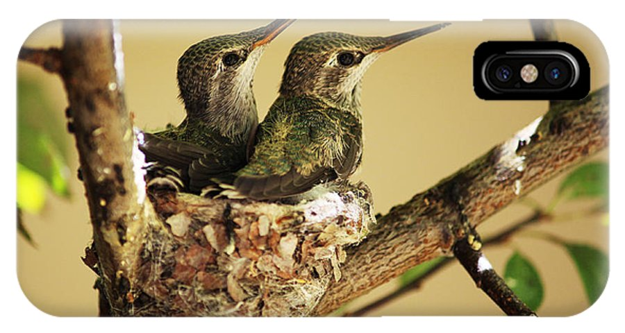 Hummingbirds IPhone X Case featuring the photograph Two Hummingbird Babies In A Nest by Xueling Zou