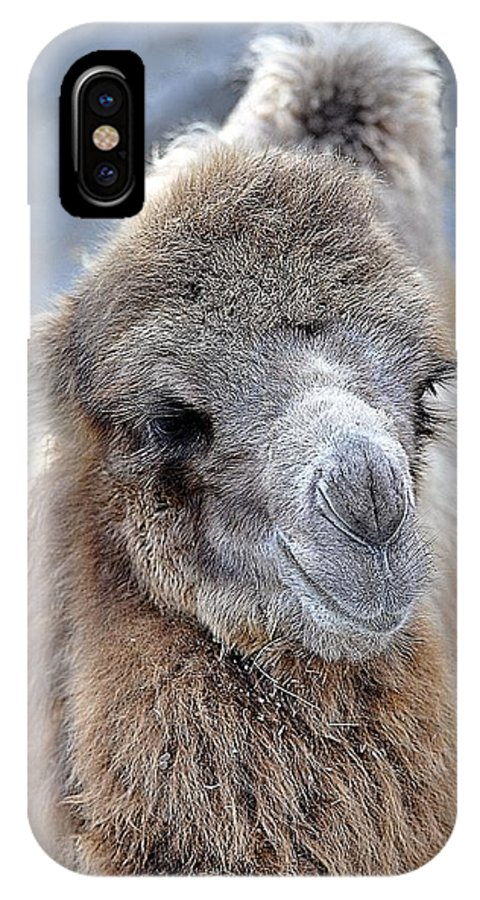 Animals IPhone X Case featuring the photograph Two Lumps Please by Jan Amiss Photography